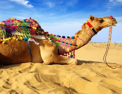 camels shark nanobodies